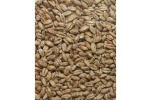 Продам Пшеничний солод