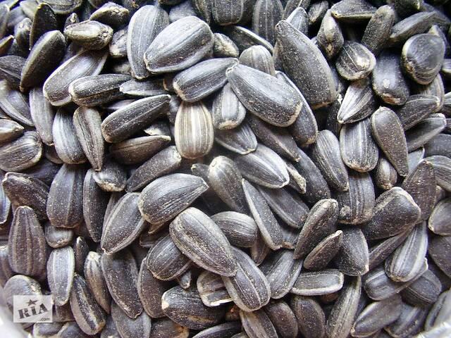 продам Семечка масличная  48% от 1 тонны с элеватора бу в Киеве