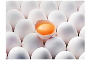 Яйце куряче, C0, С1, C2, біле і коричневе, експорт