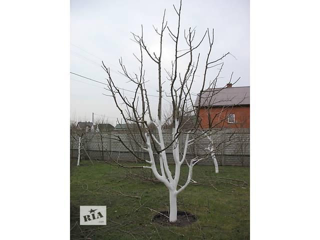 бу профессиональная обрезка плодовых деревьев в Симферополе