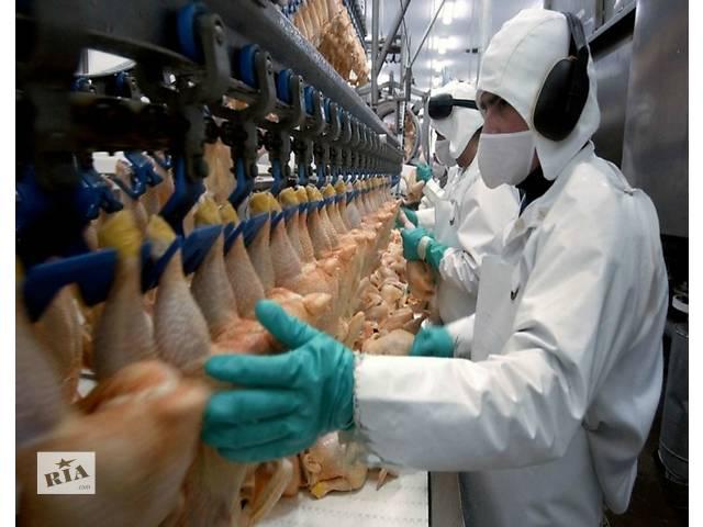 купить бу Работник в Польшу на куриное производство   в Украине