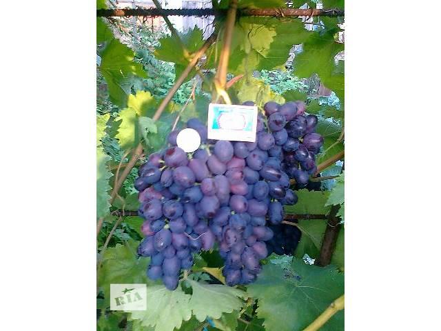 продам Саженцы винограда бу в Вышгороде