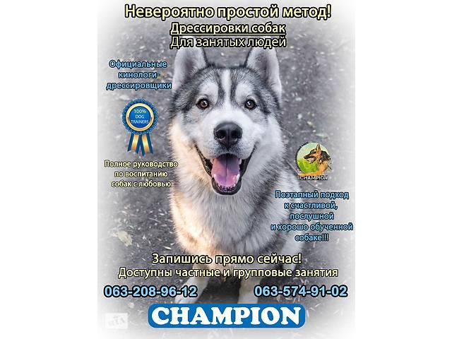 Дрессировочный клуб CHAMPION Одесса, Черноморск, Овидиополь- объявление о продаже   в Украине