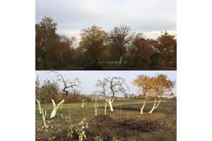 Обрізка дерев, догляд за садом. Культивація мотоблоком. Культивация