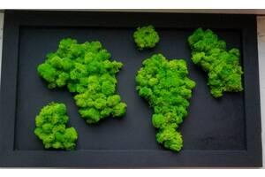 Озеленення стабілізованим мохом під ключ в Рівному