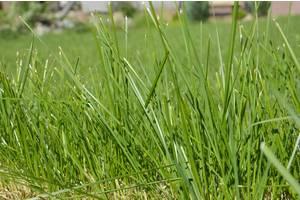 Покос травы быстро и качественно