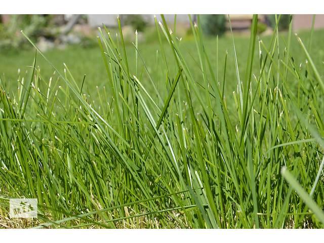 купить бу Покос травы быстро и качественно в Харькове