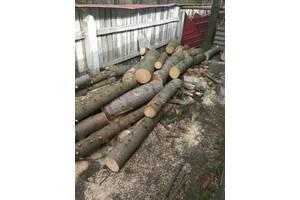 Продам свежесрубленные деревья (ясень, ель)