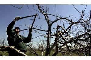 Спил аварийных деревьев , обрезка сада, услуги арбористов.