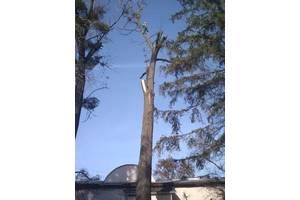 Видалення та обрізка дерев, чистка ділянок