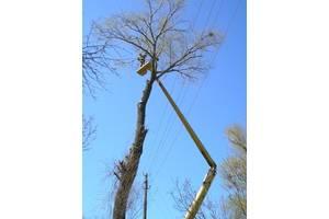 Зрізання дерев (автовишка 27 м), обрізка дерев, валка дерев, спил