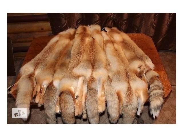 продам Шкуры рыжей лисы. Выделанные. бу в Киеве