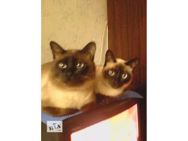 купить бу Шикарные котята в Одессе