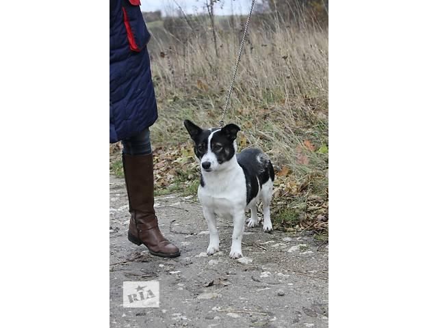 купить бу Собака ищет дом! в Тернополе