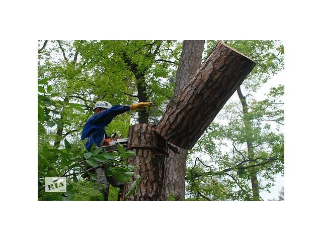 бу Спил деревьев, вывоз веток  в Запорожье