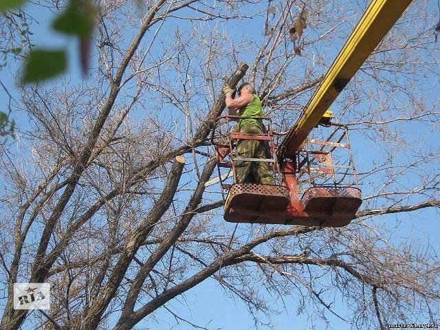 продам Спил деревьев, Кронирование деревьев, Обрезка деревьев в саду бу в Чернигове