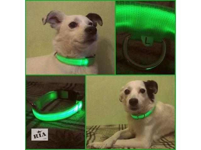 бу Светящийся ошейник для собак LED КИЕВ 95 грн в Киеве