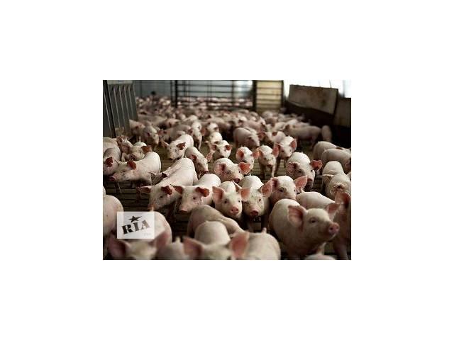 продам Свинокомплекс в Житомирской области бу  в Украине