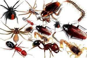 Дератизация, дезинсекция. Борьба с насекомыми и грызунами.