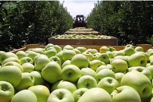 Робота в Чехії ( фруктові сади)