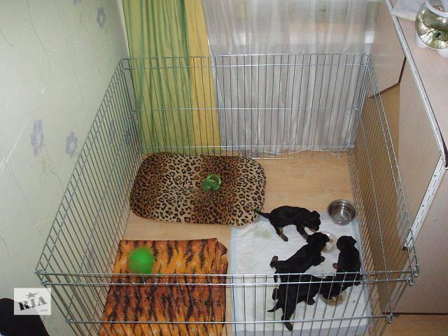 купить бу Вольер для содержания или разведения щенков 100х100х60 см (продажа/аренда) в Киеве
