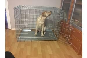 Вольер, переноска, клетка для собак Волк-1, 92х63х72h  см