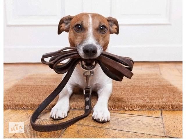 купить бу Выгуляю вашу собаку  по воскресеньям в Харькове