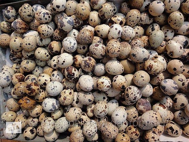 Яйца перепела пищевые диетические, перепелиные яйца, всегда свежие- объявление о продаже  в Бахмуте (Артемовск)