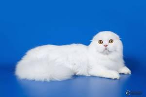 Белоснежный котик!