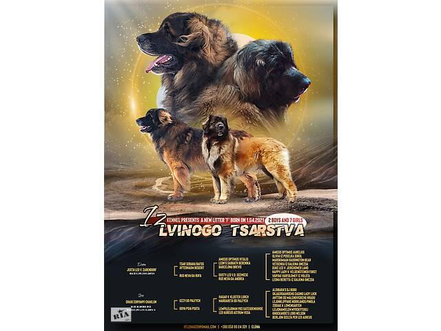 Элитные щенки леонбергера- объявление о продаже  в Краматорске