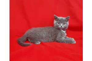 Голубой плюшевый котенок blue kitten