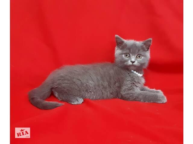 Голубой плюшевый котенок blue kitten- объявление о продаже   в Украине