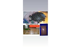 Комплект : европейская черепаха 7-8см с террариумом и кормом. Доставка по Украине