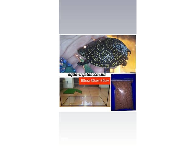 продам Комплект : европейская черепаха 7-8см с террариумом и кормом. Доставка по Украине  бу в Киеве