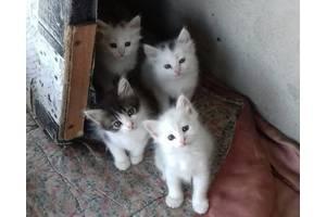 Кошенята дівчатка в добрі руки