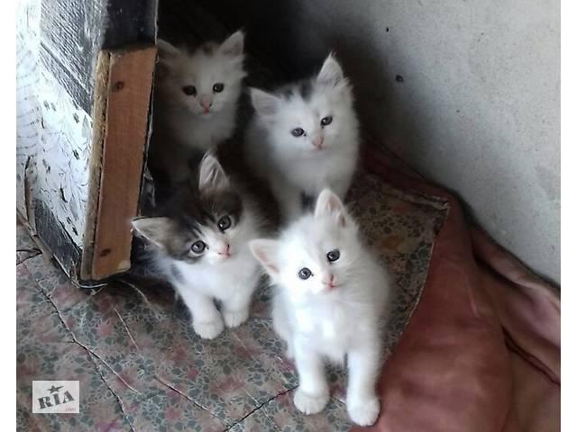 продам Кошенята дівчатка в добрі руки бу в Черновцах