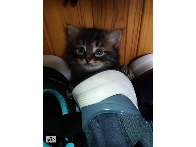 котенок мальчик БЕСПЛАТНО!- объявление о продаже   в Украине