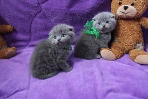 Котята чекають на переїзд у нову родину,доставка по Україні