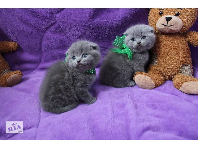 Котята чекають на переїзд у нову родину,доставка по Україні- объявление о продаже  в Кам'янець-Подільському
