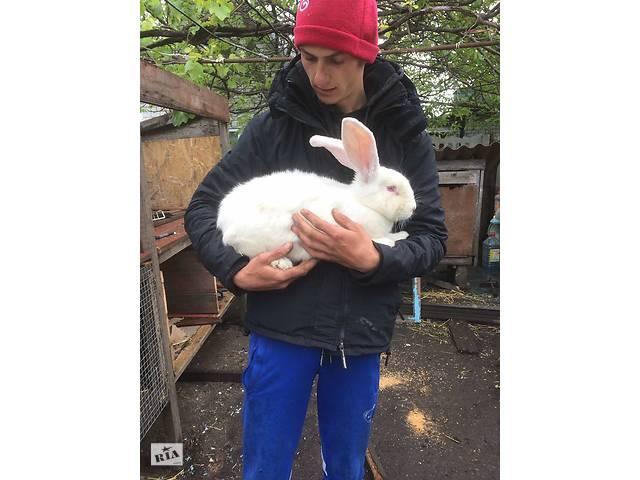 продам Кролики кролематки бу в Чернобае