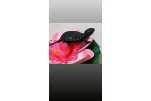 Маленькая европейская черепаха. Доставка по Украине