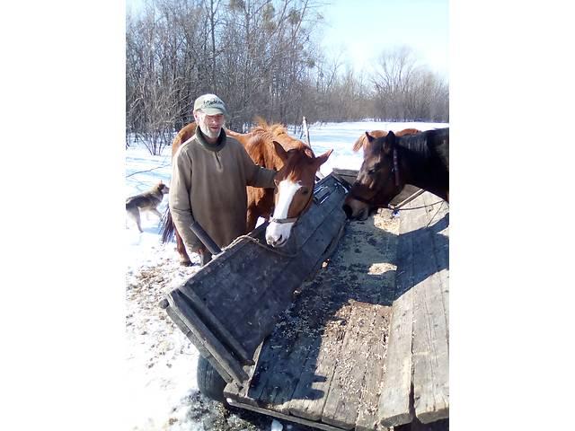 продам Молода робоча кобила бу в Бердичеве