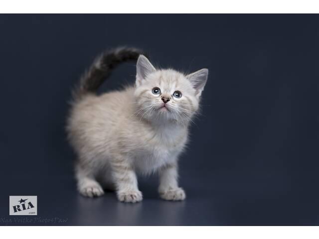 Отдам в хорошие руки котенка девочку Вонни.- объявление о продаже  в Киеве