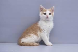 Отдам в хорошие руки котенка мальчика Эдвина .