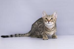 Отдам в хорошие руки котика подростка Блума .