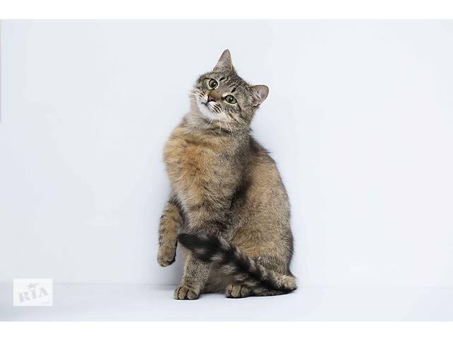 Отдам в хорошие руки молодого котика Олифа .
