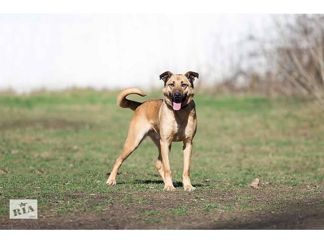 Отдам в хорошие руки молодого пса Вандера.- объявление о продаже  в Киеве