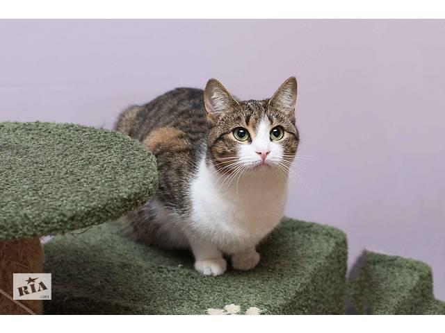 продам Отдам в хорошие руки молодую кошечку Ёлку. бу  в Украине