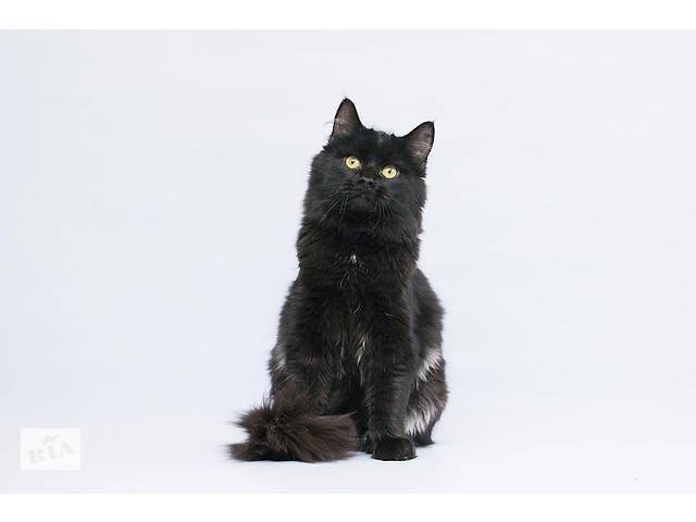 купить бу Отдам в хорошие руки юного котика необыкновенного окраса Лохматыча.  в Украине