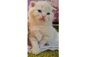 Породистые котятка